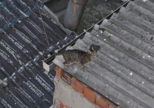 Голодный стамбульский кот