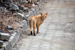 Рыжий кот в Кемере
